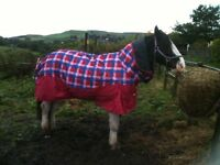 Masta Horse turnout rug - Red Check 6'6""