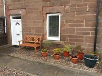 1 bedroom flat Montrose