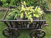 Vintage wooden dog cart
