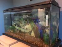 Clear seal 3ft fish tank big
