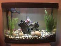 64 Litre Panorama Aquarium including moonlight, with 4 fancy goldfish, gravel filter and extras