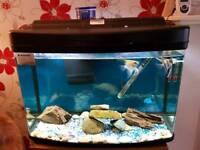 Fish tank tropical setup
