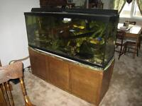 120 gallon aquarium with canopy, heater, filter and stand