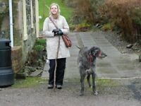 Walkies with Claire- Dog walking/ Cat sitting/Dog walker/ Cat sitter- Eastend & Bargeddie