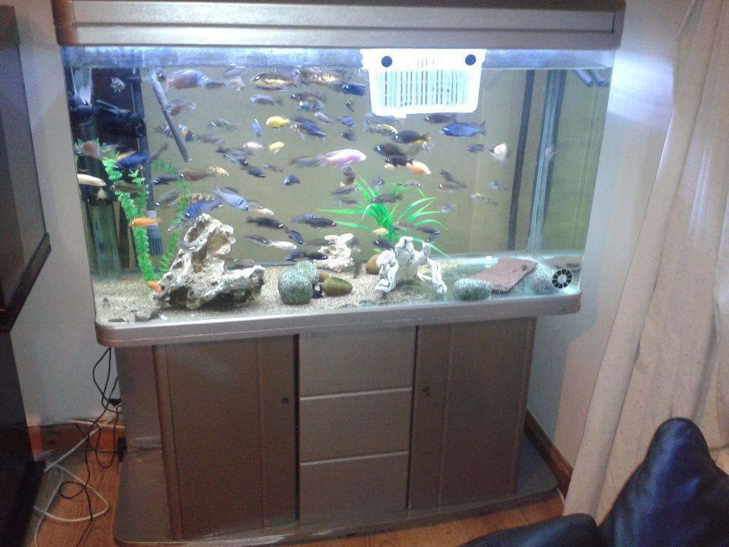 huge 400 litre 4ft boyu fish tank stand reinforced glass bargain in glenfield. Black Bedroom Furniture Sets. Home Design Ideas