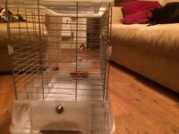 Bird cage budgies