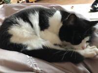 Female black & white cat