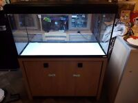 Fluval Roma 200 with Stand Tropical and Marine fish tank