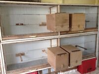 Budgie Double Breeder/Stock Cages For Sale