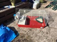 Indoor guinea pig hutch £45ovno