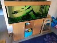 juwel 240l fish tank