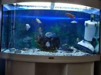 Fish tank ( juwel aquarium)