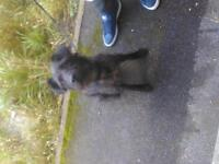 patterdale £200 or nearest ...