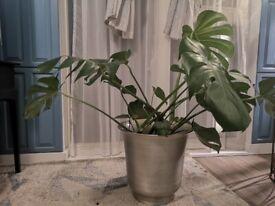 Beautiful designer planter