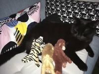 NOW FOUND! Black Cat Missing - Brunswick / Hillside Area Leith
