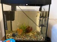 Gold fish goldfish tank