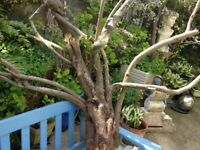 Driftwood Ideal terrarium branches