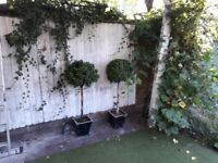 Two Artificial bay trees about 4 foot very realistic balcony or patio