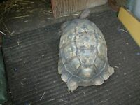 My tortoise was taken from my garden any help to find it would be appreciated
