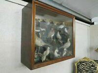 Taxidermy 21 Bird Collection (1934)