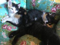 5 super cute confident happy kittens