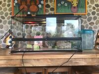Exo Terra Vivarium: Reptile tank plus accessories £120