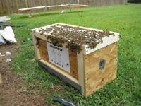 Beekeeping supplies, Bees for sale, Nucs