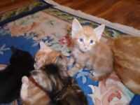MIX beautiful kittens for sell