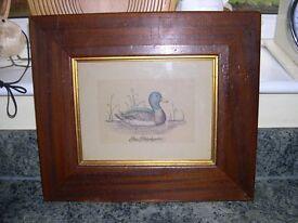 Two mahogany framed and glazed prints of ducks.