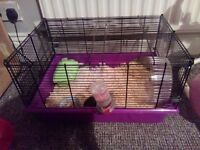 Male and female hamster with cage
