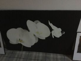 Large black and white canvas and two black and white lily pictures