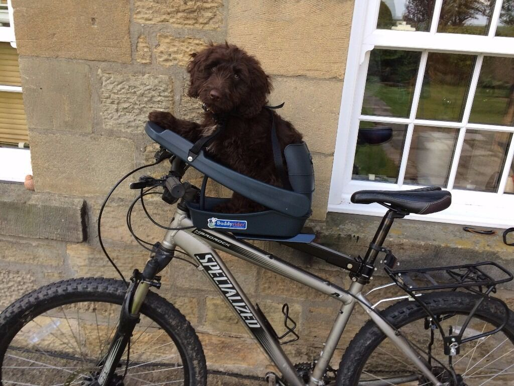 Buddy Rider Dog Carrier Seat For Bike In Morpeth