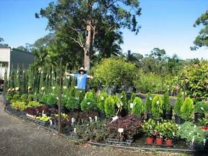 Give a LIVING GIFT for A BIRTHDAY PRESENT - HUGE RANGE OF PLANTS Tallai Gold Coast City Preview