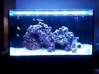 Nuvo fusion nano 20 marine tank full set up