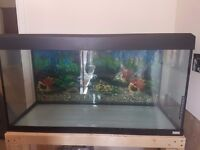 Large fish tank for sale.