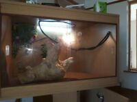 Reptile vivarium and accessories suitable for bearded dragon