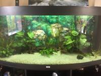 450 litre Juwel vision fish tank
