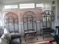 2 x african grey parrots with matching cages £500 each