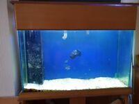 Marine fish tank with sump