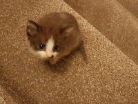 Last kittens for sale