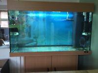 Juwel Rio 125 fish tank in beech