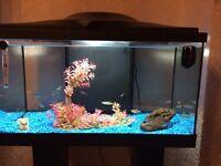 Full fish tank set up including fish