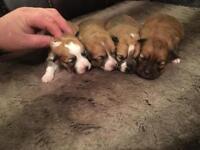 Beautiful puppies