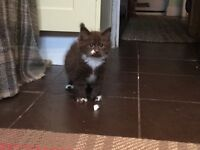 Kittens ready for homing butiful and playful.