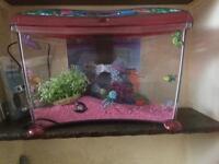 Girls fish tank
