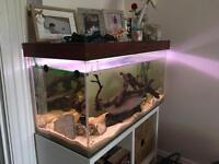125 litre Aquarium with Eheim external filter
