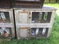 Fir sale double rabbit hutches £35 each 2 left