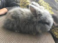 Baby rabbits fluffballs