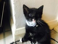kitten looking for 5*home