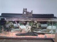 4ft fishtank and fish